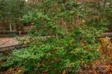 Atlantic County Park - Estell Manor - 05