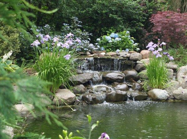 garden ponds delight ramblin'