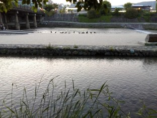 The Kamogawa on a summer morn