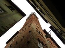 Torre Guinigi (Guinigi Tower), Lucca