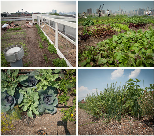 Brooklyn Rooftop Garden - Greenpoint