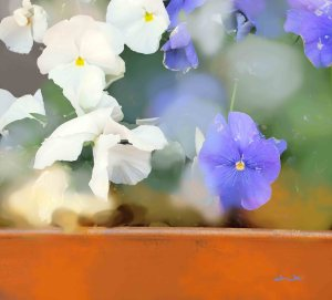 pansies, flower photography, floral photography, flower art, floral art