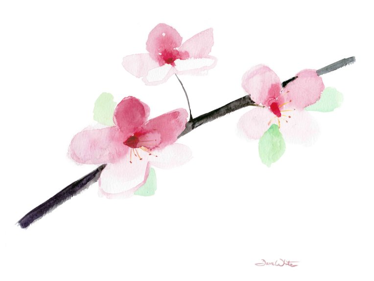 """cherry blossoms painting"", ""cherry blossoms watercolor"", ""cherry blossoms art"", ""cherry blossoms artwork"", ""buy cherry blossoms painting"""