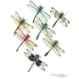 Dragonflies and others