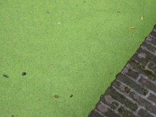 groene1.jpg