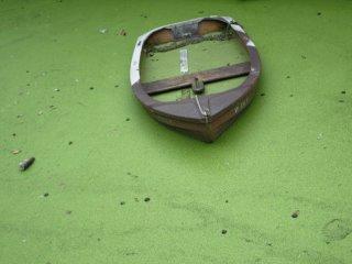 groene2.jpg
