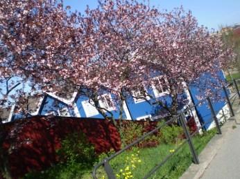 Bjorkholmen_Spring