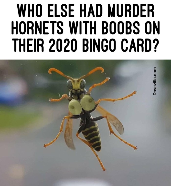 Who else had Murder Hornets with boobs on their 2020 BINFO Card??
