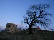 Un arbre à l'écart de l'agitation de la ville d'Istanbul, sous lequel je m'abrite avant de reprendre ma route en autostop vers la France. http://david-pagnon.com/ecrits/une-tente-un-pouce/
