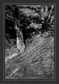 Rock & tree shadows-Edit