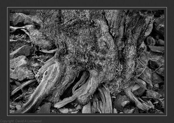 Tree & Rocks 11