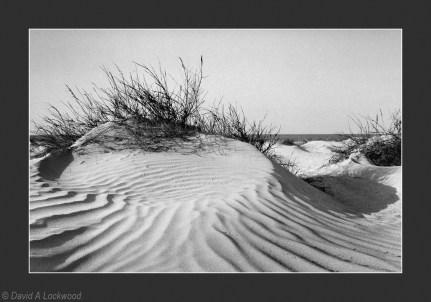 Sand & grass Barr Al Hikman