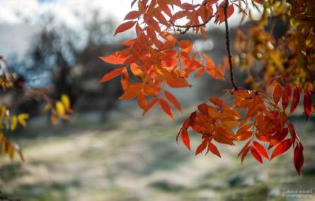 South View, Orange Leaves