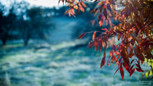 Red Leaves, South View, Afternoon