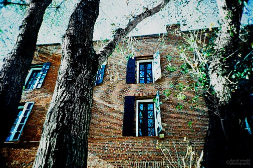 Trees, Pioneer Park, Old Town Sacramento. (Kodak EliteChrome EB3 film, process C-41.)