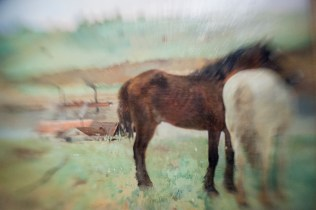 Borrowed Source: Horse Detail, Edgar Degas, (French, 1834-1917), Horses in a Meadow, 1871, National Gallery of Art.