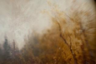 Borrowed Source: Tree Detail, Thomas Hill, (1829-1908, American) Mist in Tenaya Canyon, 1885, Crocker Art Museum.
