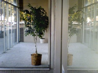 Small Potted Tree, B Street, Marysville, California