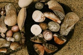 shell_city