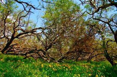 Looks_like_spring
