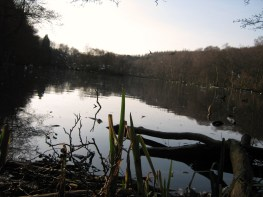 The Coppice Pond