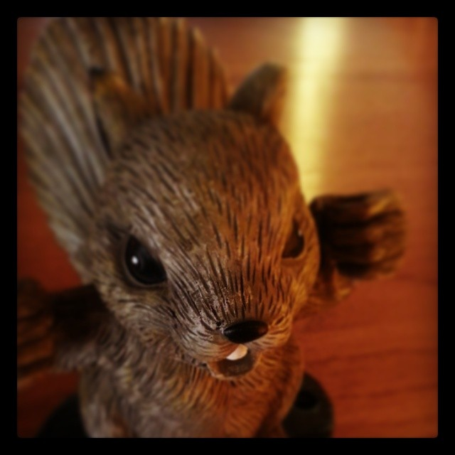 Evil squirrel