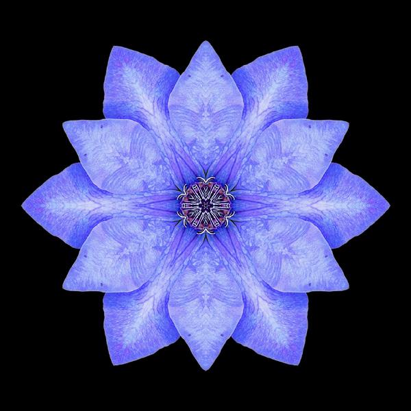 Blue Clematis I flower mandala