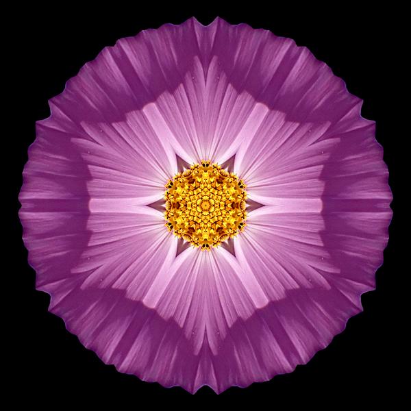 Violet_Cosmos_II_600x600.jpg