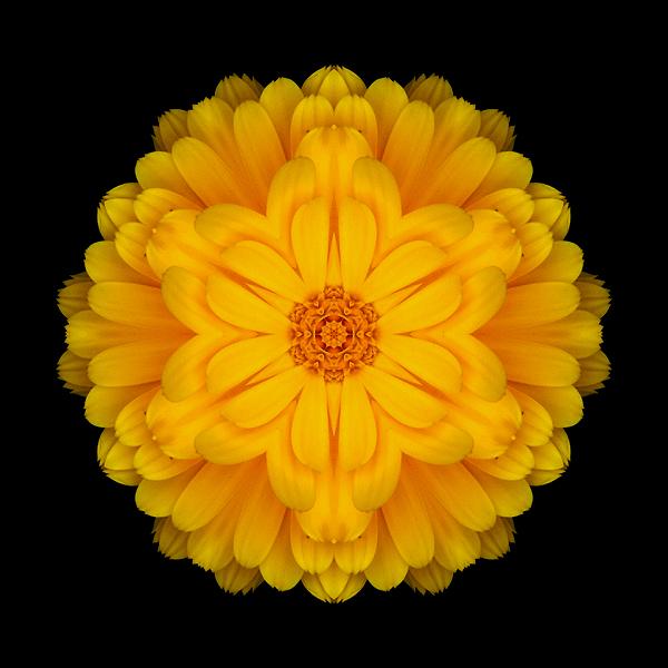 Yellow Marigold I flower mandala
