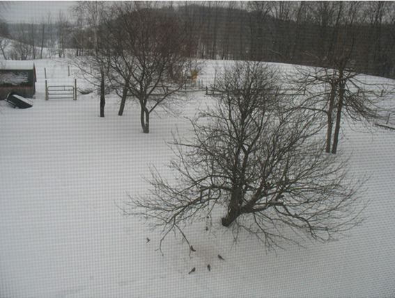 Tracy's backyard view in upstate New York.