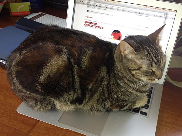 laptop warmth