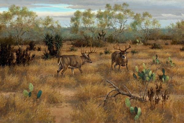 South Texas Deer Hunting Paintings