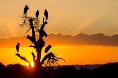 Malawi - Impietrito per la bellezza del momento, faccio compagnia a questo gruppo di Anastomi africani sulla riva settentrionale del fiume Shire