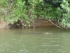 09-daintree-river
