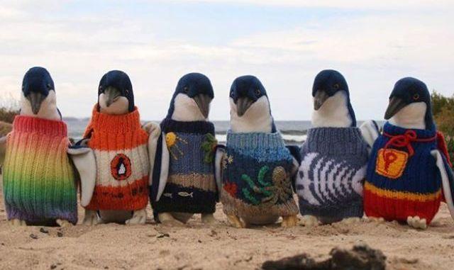 croiser pingouins australie