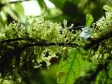 mosses-take-wing-copy