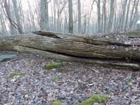 2013-12-16-ash-log