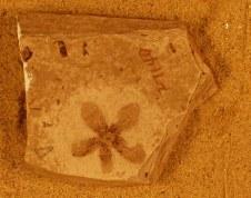 astronium-truncatum-florissant-fossil-at-yale-peabody-museum-copy