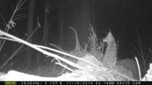 coyote-on-log-2