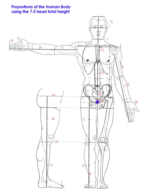 Human Skin Diagram Label, Human, Free Engine Image For