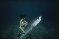 A stuntwoman riding a tiger shark for the movie Shark Boy of Bora Bora.