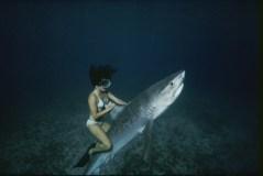 A stuntwoman riding a tiger shark for the movie Shark Boy of Bora Bora.
