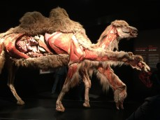Seeing inside a camel