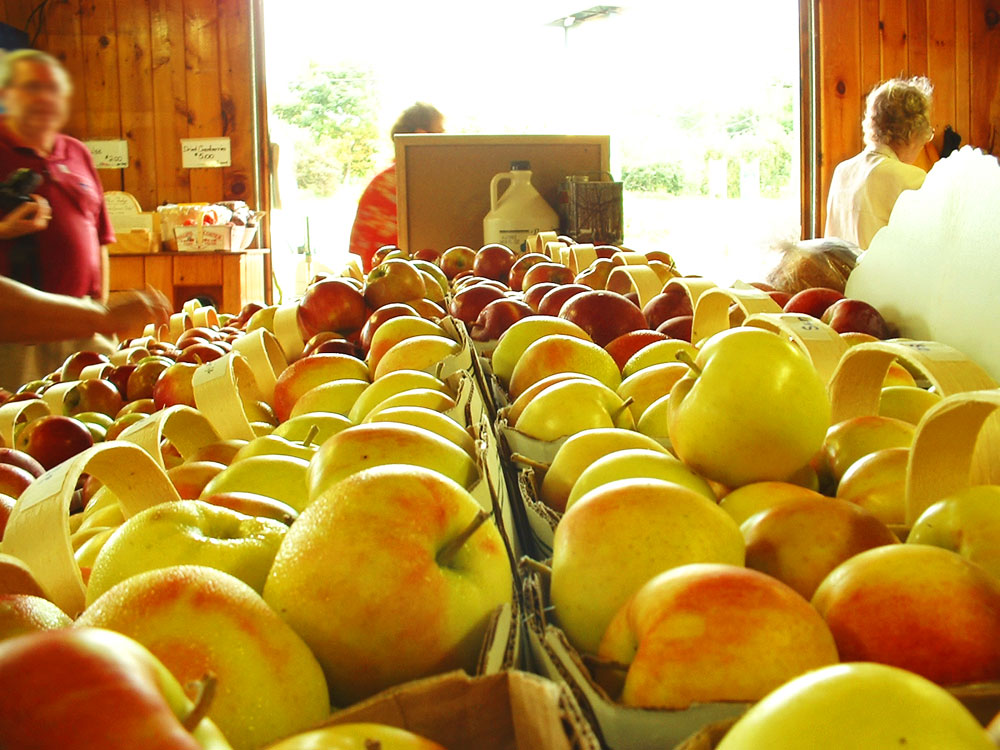 apples003