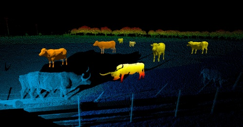 Cows Point Cloud