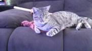 Fatty Muffins - Neighbor's Cat, chillin' on my sofa