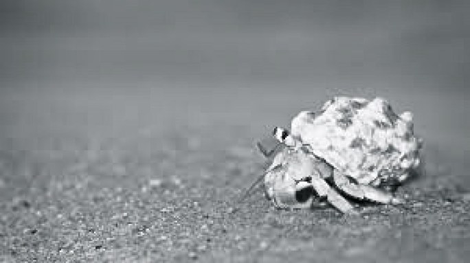 Hermit Crab.mid works
