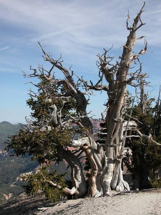 Yosemite Falls Wallpaper Prometheus Tree Photo Gallery