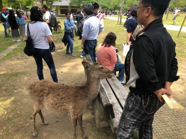 Deer and crowds in Nara (2019).