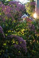 davidniddrie_woodlandgarden_aug-8242